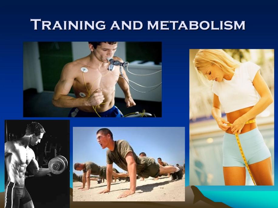 Training & Metabolism Webinar