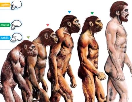 Ape feet evolution